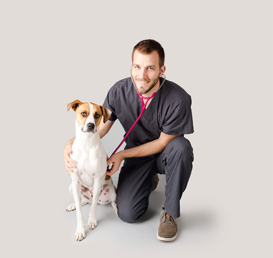 Perro con Veterinario
